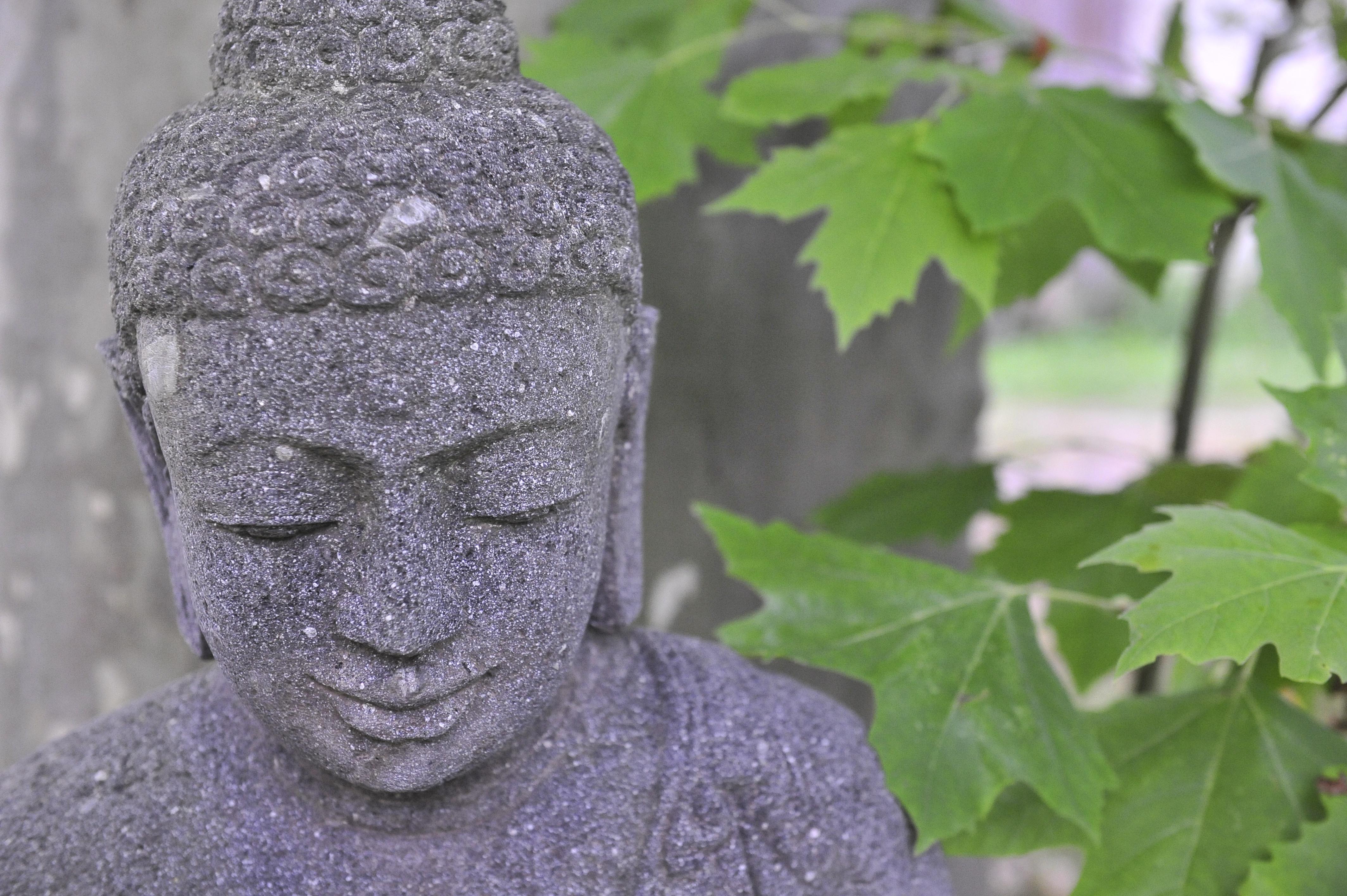PLUM VILLAGE-Buddha Baum